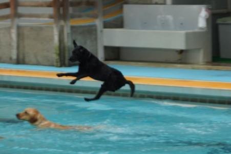 ワフ プール 飛び込み