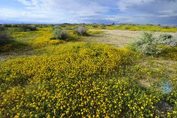 blog (6x4@300) Yoko 6 Mojave, Goldfields, CA_DSC7364-3.20.19.jpg