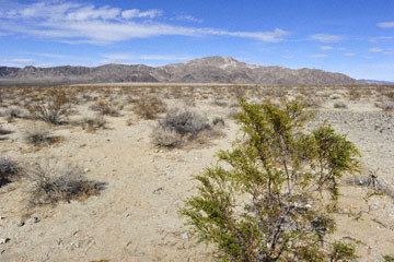 blog 5 Twentynine Palms, Joshua Tree NP, Turkey Flats, Pinto Mountain (3,983')_DSC7697-3.20.18.(2).jpg