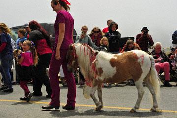 blog 96 July 4th Parade, Village Veterinarian, Mendocino, CA_DSC7846-7.4.19.(2).jpg
