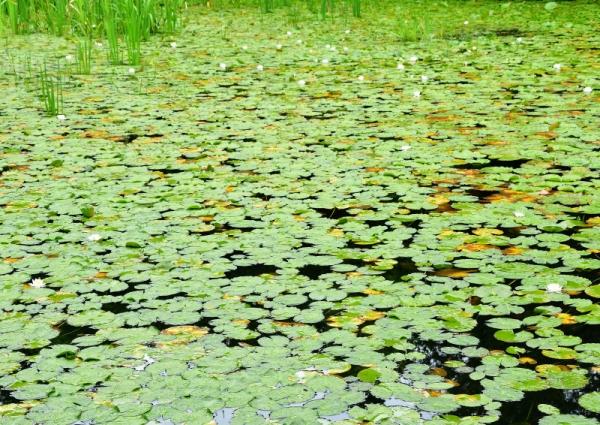 3小松ヶ池190701