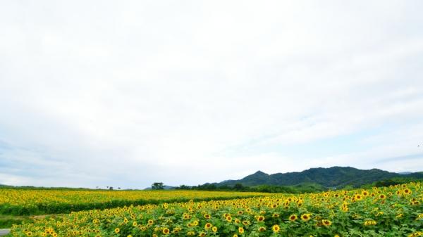 6中山190706