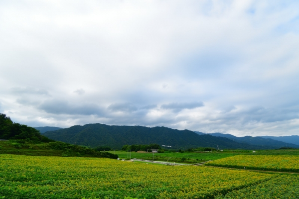 3中山190706