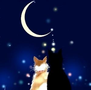 月猫、名は文太郎