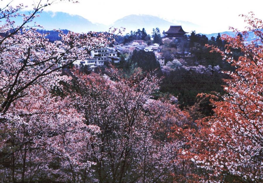 吉野山01