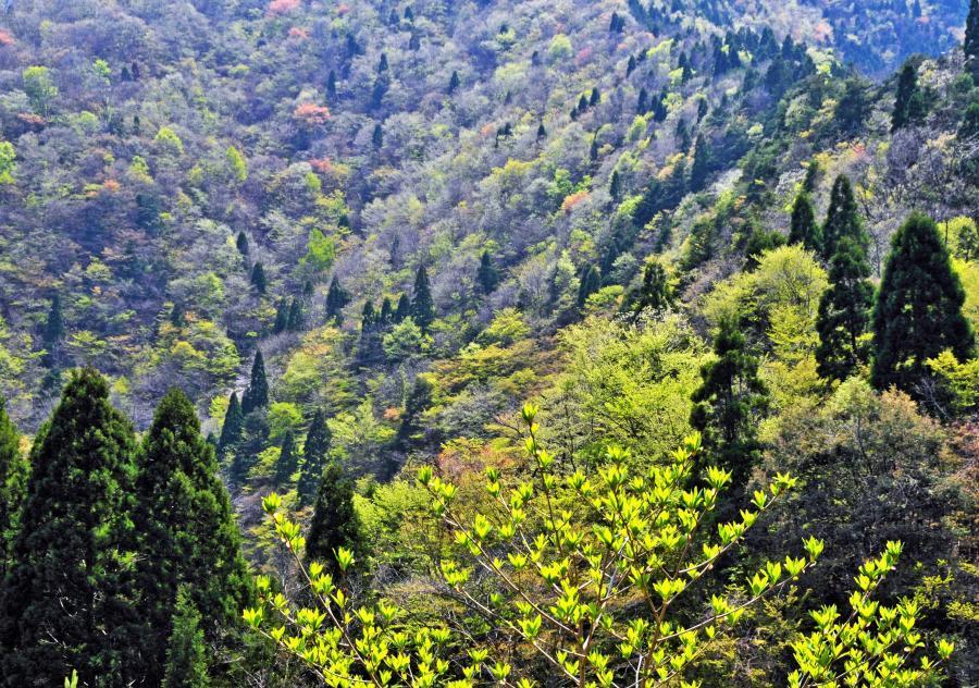 美山(春)1
